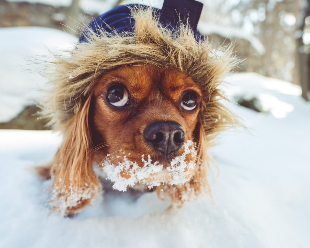 Protect Your Pets this Winter